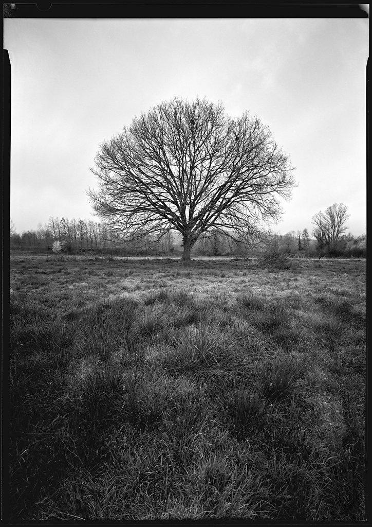 arbre-rousse-160322-web.jpg