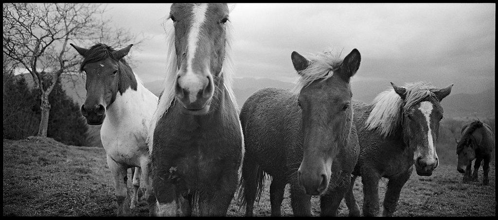 Cinq chevaux devant dont un derrière
