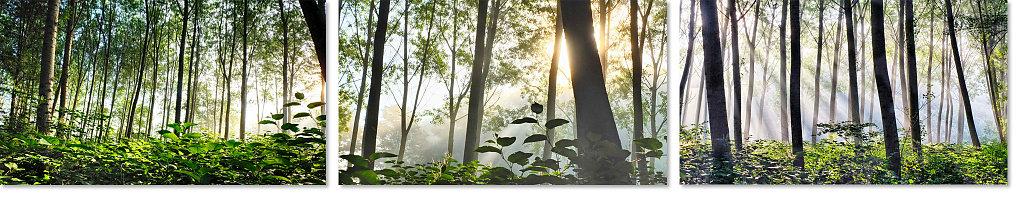 Triptyque dans les bois